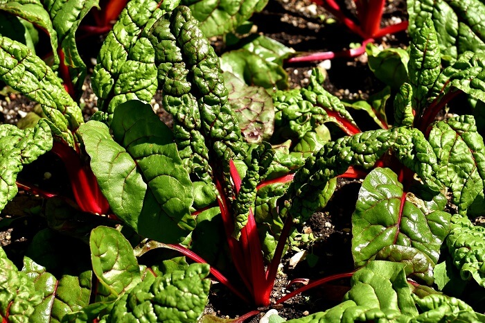 swiss chard brain food